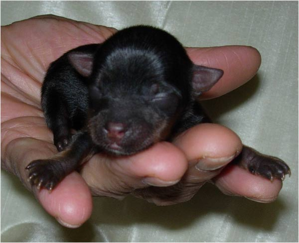Pin Chien Bebe Chiot on Pinterest