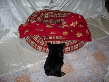 dog-bed-for-miniature-teacup-toy-yorkie-puppy-and-dog